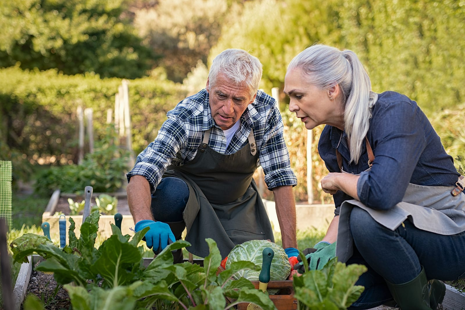 Senior man and woman gardening in the summer